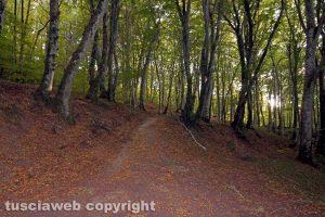 Il bosco di Montefogliano