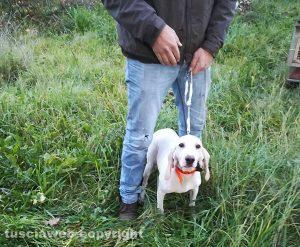 Valentano - La cagnolina salvata