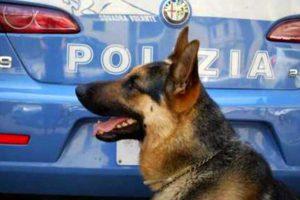 Un cane antidroga della polizia dello stato