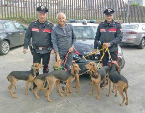 I cani ritrovati dai carabinieri di Bracciano