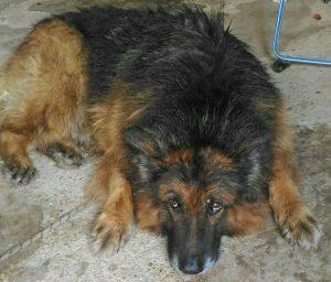 Cane trovato a Tobia