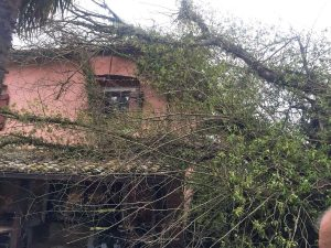 Sutri - Albero piomba su una casa