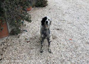 Il cane trovato a Riello