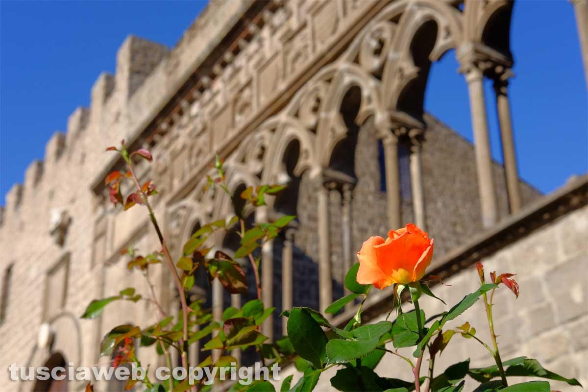 Palazzo Dei Papi Fa Da Sfondo A Una Rosa Arancione Tusciawebeu
