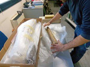 Bagnoregio - Le zanne dell'elefante primitivo pronte per il restauro
