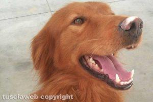 Viterbo - Jimi, il cane smarrito