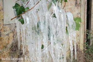 Vallerano - Lo spettacolo del ghiaccio aggrappato a una pianta