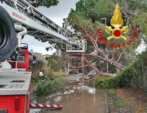 L'intervento dei vigili del fuoco per il pino caduto in mezzo alla strada