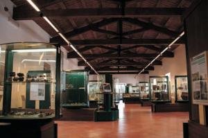 Farnese - Il museo civico