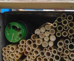 Celleno - Le api impollinatrici