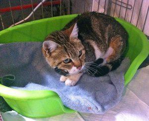 Viterbo - La gatta salvata a pratogiardino Lucio Battisti