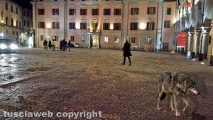 Viterbo - Un lupo a piazza del Comune