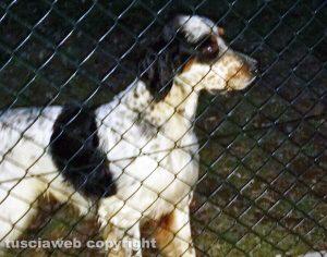 Vitorchiano - Il cane ritrovato al Pallone