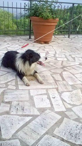 Viterbo - Il cane trovato in strada Roncone
