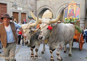 Viterbo – La processione del santissimo Salvatore