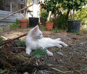 Bastet associazione felina viterbese - Parte civile nel processo