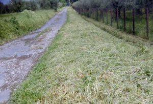Montefiascone - Ripulita la via Francigena