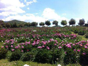 Il centro botanico Moutan a Vitorchiano