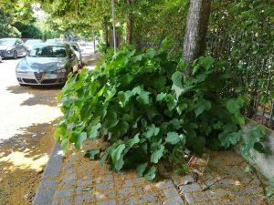 Viterbo - Marciapiedi inaccessibili in via Tarconte