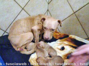 Sutri - Cane e cuccioli che sarebbero stati maltrattati in una casa a Fonte Vivola