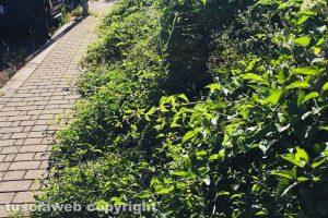Viterbo - Via Raffaello invasa dalle erbacce