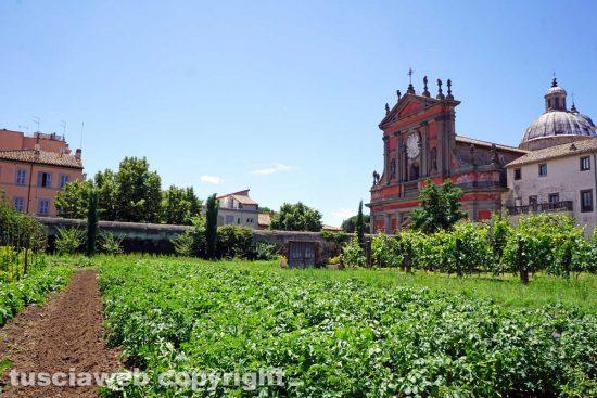 Viterbo - L'orto della chiesa della Trinità