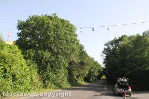 Tobia - L'albero delle scarpe da tennis