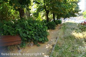 Viterbo - Il giardino antistante la chiesa di Santa Maria del Paradiso