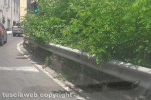 Viterbo - Il semaforo immerso nel verde a Bagnaia