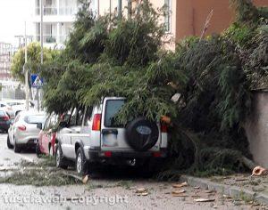 Viterbo - Via Monti Cimini - L'albero che si è abbattuto sulla macchina