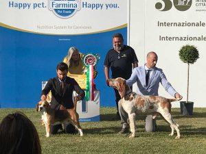 50esima esposizione internazionale canina città di Viterbo