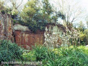 Viterbo - La necropoli di Castel d'Asso con gli asfodeli