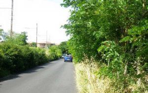 Vegetazione sulla strada Capretta
