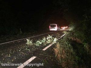 Maltempo - Uno degli alberi caduti sulla Commenda che è rimasta bloccata