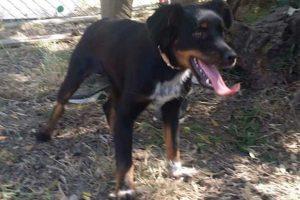 Viterbo - La cagnolina trovata lungo strada Tobia