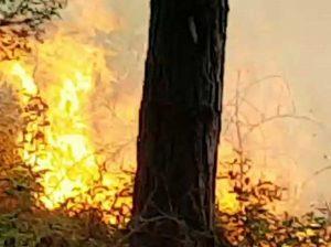 Tarquinia - L'incendio nella pineta di San Giorgio