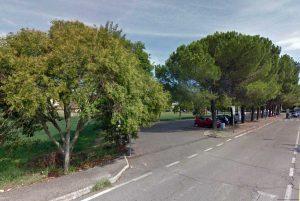 Orte - I pini da abbattere in località Petignano