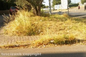 Viterbo - Le erbacce su strada Santa Barbara