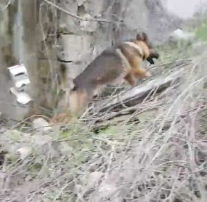 Il cane eroe dei terremotati Kaos