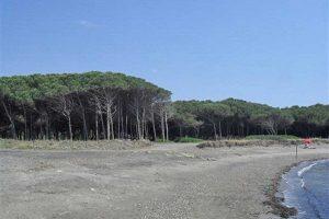 Tarquinia - La pineta di San Giorgio