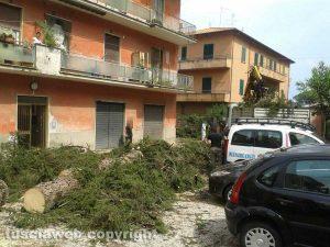 Capranica - Albero caduto in un condominio