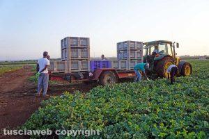Viterbo - La vita del bracciante agricolo