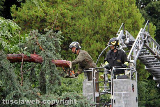 Albero caduto - Vigili del fuoco al lavoro