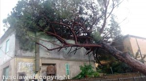 Civita Castellana - Albero crolla su una casa