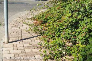 Viterbo - Incuria nei marciapiedi