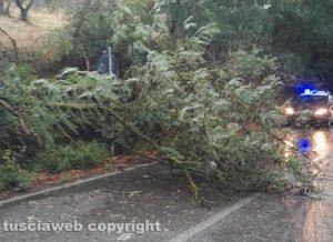 Bolsena - L'albero caduto sulla Cassia