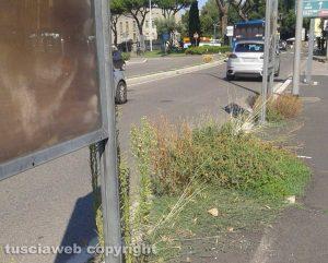 Viterbo - Erbacce a piazzale Gramsci