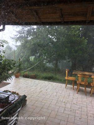 Ronciglione - Maltempo - Albero abbattuto
