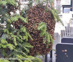 Montefiascone - Il nido di api