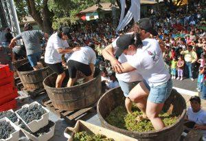 Castiglione in Teverina - Festa della vendemmia
